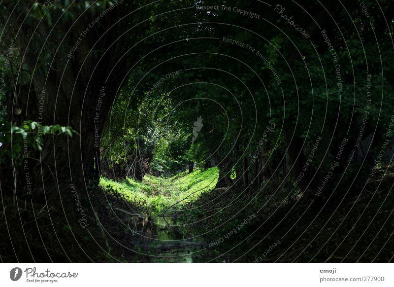 Märchenwald Umwelt Natur Landschaft Pflanze Baum Grünpflanze Wald Bach natürlich grün Farbfoto Außenaufnahme Menschenleer Tag Licht Schatten Kontrast