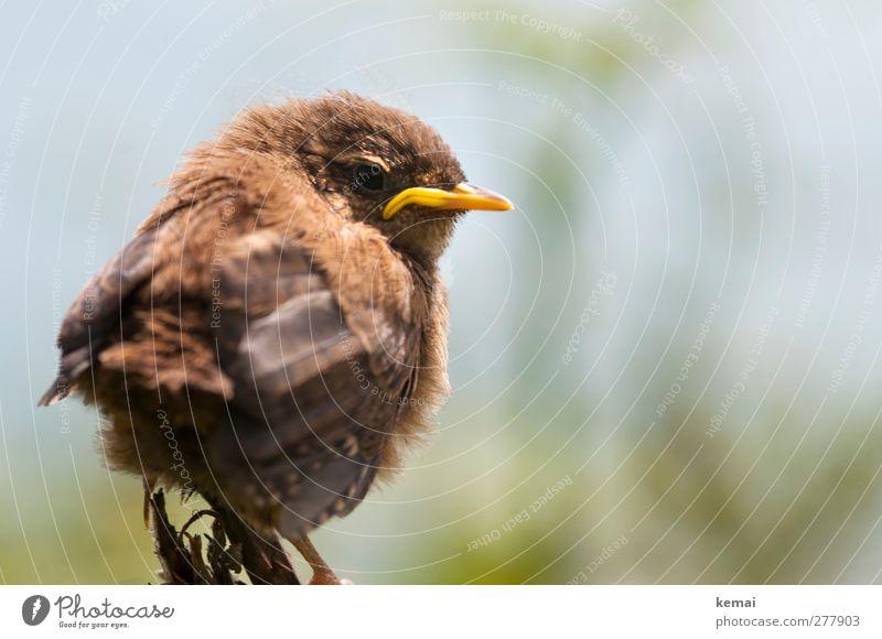 Really p***** off Tier gelb klein Tierjunges Vogel braun Wildtier sitzen Flügel Tiergesicht Wut Schnabel Ärger gereizt Feindseligkeit