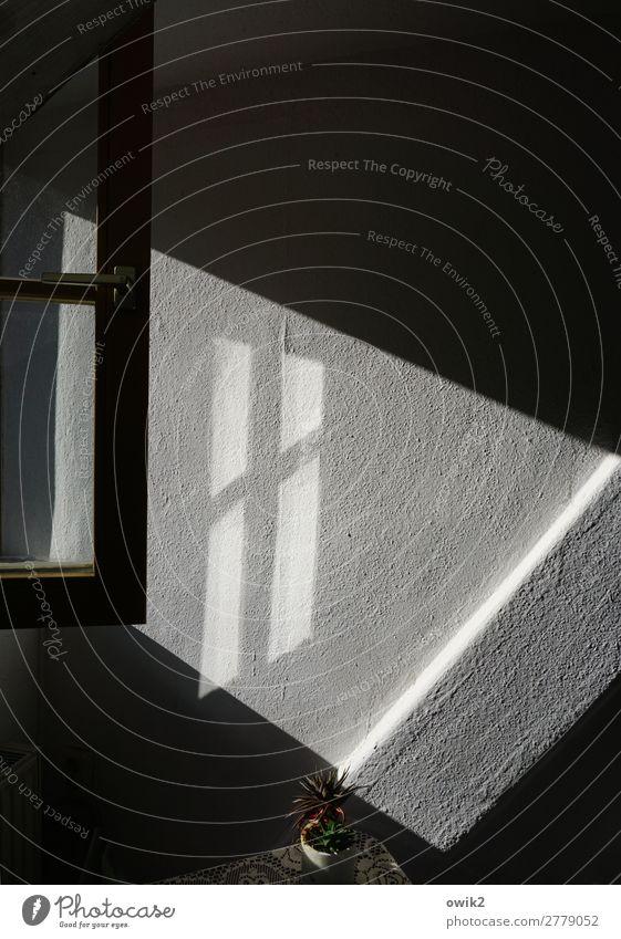 Müllers Büro Topfpflanze Mauer Wand Fenster Tapete Raufasertapete Fensterrahmen Fensterkreuz eckig einfach ruhig friedlich Farbfoto Gedeckte Farben