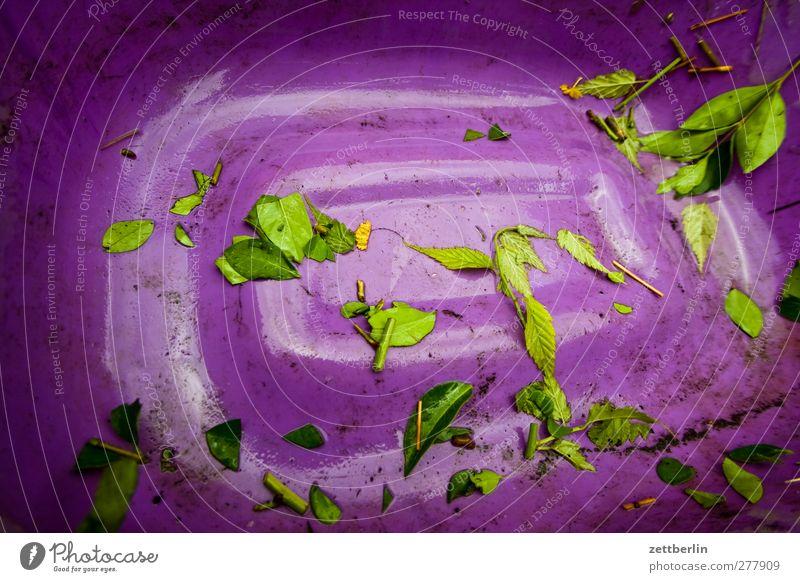 Reste Schalen & Schüsseln Umwelt Natur Sommer Pflanze Blatt Garten alt nachhaltig Behälter u. Gefäße Eimer Unkraut wallroth Kompost Müll Biomasse Farbfoto