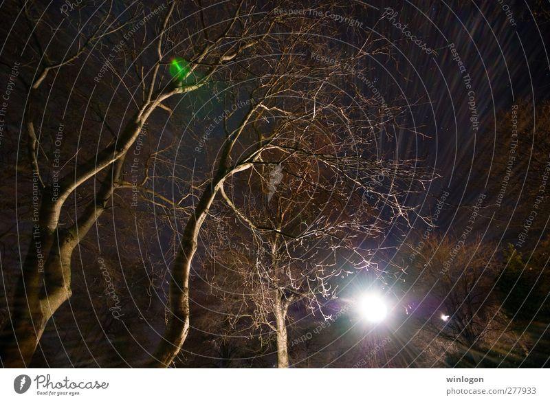 wide angle flare Natur blau alt Baum Pflanze Winter Wald Herbst Garten Denken träumen Kunst Park braun glänzend groß