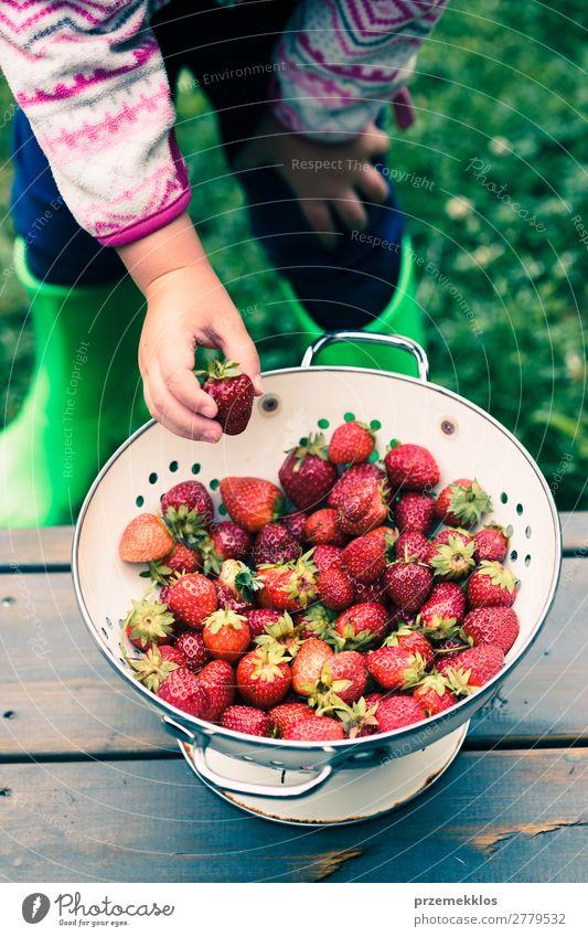 Das Kind nimmt eine frische Erdbeere aus der Schüssel. Frucht Vegetarische Ernährung Schalen & Schüsseln Sommer Tisch Frau Erwachsene Hand Natur Holz lecker