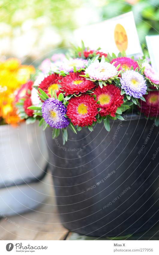 Blumenkübel Frühling Sommer Blüte Blühend Duft mehrfarbig Blumenstrauß Eimer Kübel Strohblume Blumenhändler Blumenladen Wochenmarkt Farbfoto Außenaufnahme