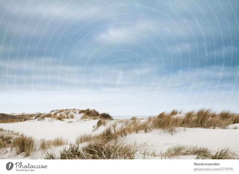 Sommer Sinnesorgane Erholung ruhig Strand Meer Natur Landschaft Pflanze Sand Himmel Wetter Küste Nordsee trocken blau braun Fernweh Einsamkeit