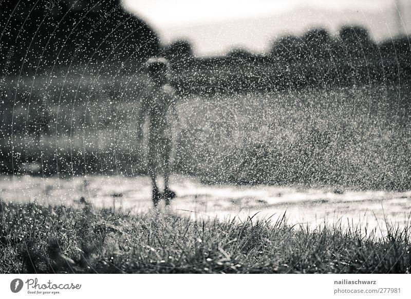 Regen Mensch Kind Kleinkind Junge Kindheit Körper 1 3-8 Jahre Natur Landschaft Pflanze Wasser Wassertropfen Gras Feld Spielen stehen Fröhlichkeit Glück lustig