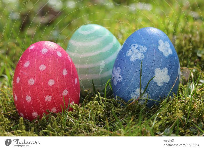 Ostereiersuche Natur blau mehrfarbig grün rot Frühlingsgefühle Feiertag Ostern Religion & Glaube Ferien & Urlaub & Reisen Wunsch Fröhlichkeit Osternest