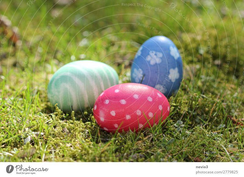 Ostereiersuche Natur rund blau mehrfarbig grün rot Muster Ei natürliche Farbe Suche finden Ostern Feiertag Feste & Feiern Osternest gepunktet Verschiedenheit