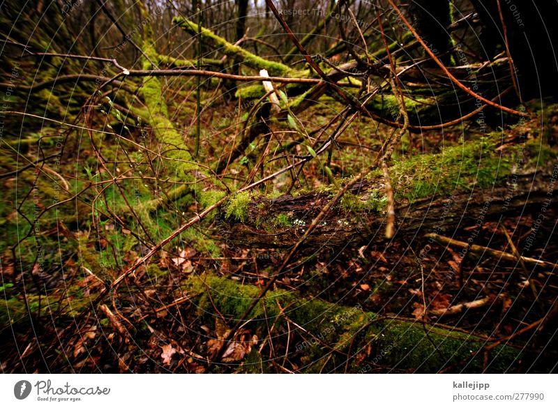 dickicht Umwelt Natur Pflanze Tier Erde Baum Sträucher Moos Wald dunkel Ast Sumpf Unterholz verzweigt Barriere Farbfoto Gedeckte Farben Außenaufnahme Licht