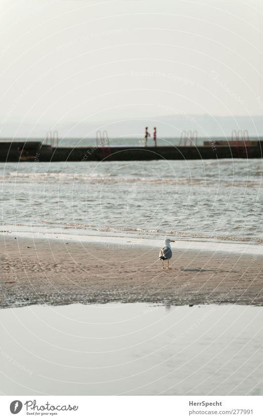 Morning Talk Mensch Frau Himmel Natur Ferien & Urlaub & Reisen Sommer Meer Strand Erwachsene Landschaft feminin sprechen Küste Sand Zusammensein Wellen