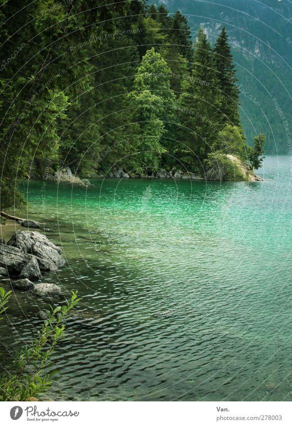 Eibsee Natur Landschaft Wasser Pflanze Baum Wald Felsen Seeufer Stein nass grün türkis Farbfoto Außenaufnahme Menschenleer Tag Licht Lichterscheinung