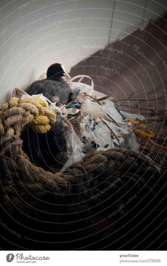 Umweltverschmutzung Natur Einsamkeit Tier dunkel kalt Tierjunges Traurigkeit Vogel Wildtier sitzen dreckig Armut Seil schlafen trist