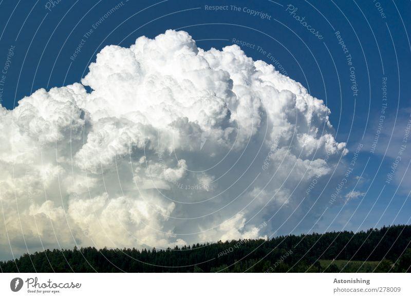 wuchtige wolke Umwelt Natur Landschaft Luft Himmel Wolken Gewitterwolken Horizont Sommer Wetter Pflanze Baum Wald Aggression dunkel heiß blau weiß Macht Dynamik