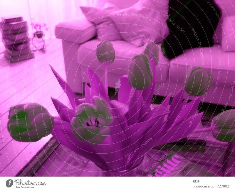 Lila Tulpen Stil violett Wohnzimmer