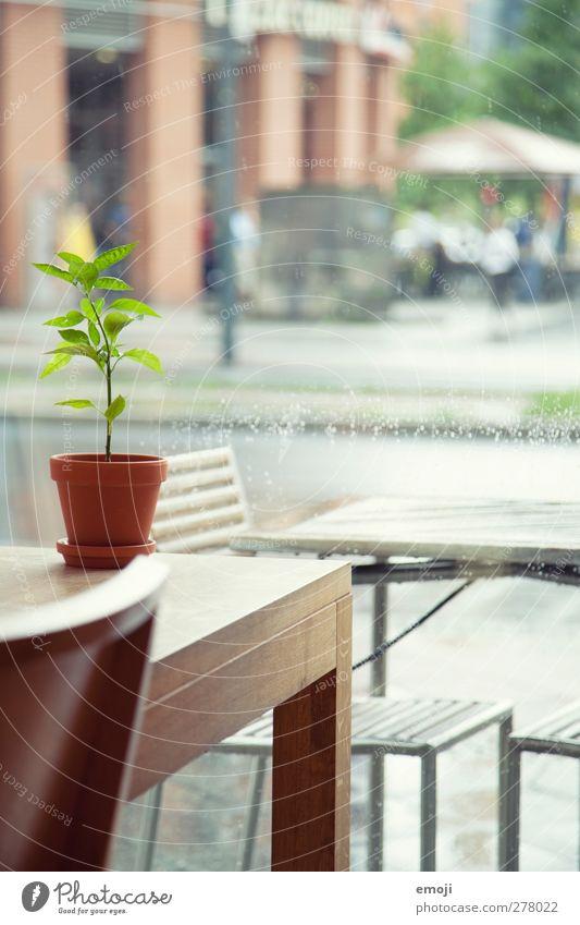 innen ist's trocken [B] Pflanze Grünpflanze Topfpflanze Dorf Stadt Fenster Tisch Stuhl natürlich grün Regen Innerhalb (Position) Farbfoto Innenaufnahme