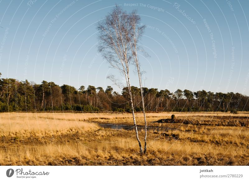 Dünenlandschaft am Niederrhein Umwelt Natur Landschaft Schönes Wetter Baum Gras Moor Sumpf natürlich geduldig ruhig Leben Ausdauer standhaft Zufriedenheit