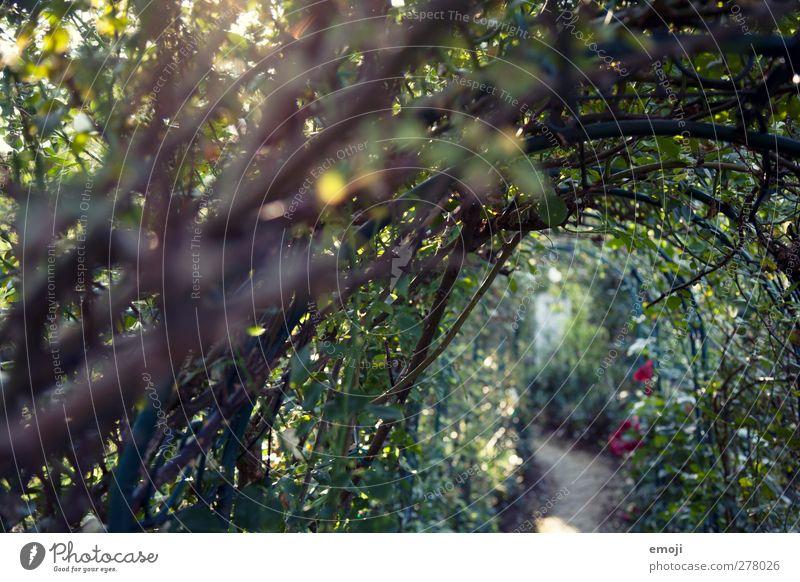 verwunschen Natur Pflanze Umwelt Frühling natürlich Sträucher Grünpflanze Märchenwald Traumwelt