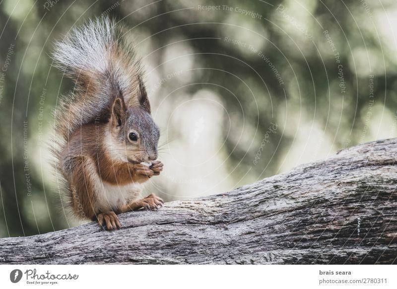 Natur Sommer grün rot Baum Tier Wald Gesicht Essen Herbst gelb Umwelt natürlich klein braun Erde