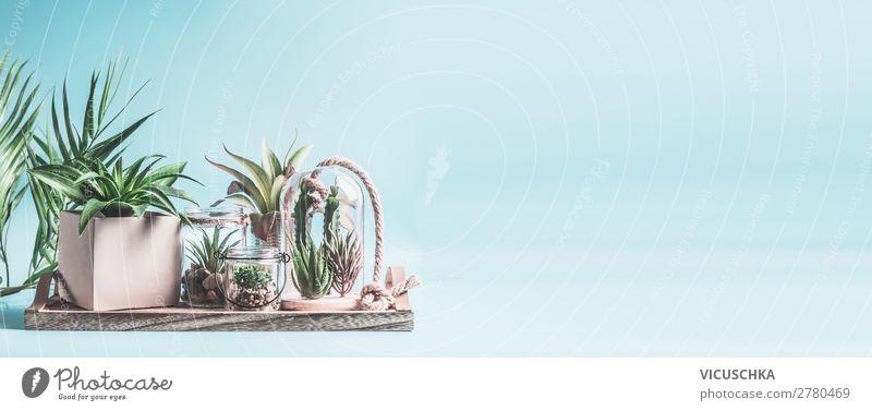 Heimischer Sukkulentengarten. Gewächshauspflanzen in Töpfen, Glasterrarium und Gläsern auf dem Tisch vor pastellrosa Hintergrund. Verschiedene Sukkulenten- und Kaktuspflanzen in Glasschalen. Modernes Zimmerpflanzenkonzept, Banner