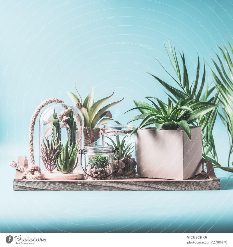 Zimmerpflanzen Oase Garten Stil Design Häusliches Leben Innenarchitektur Dekoration & Verzierung Tisch Natur Pflanze Topfpflanze Mauer Wand trendy Terrarium