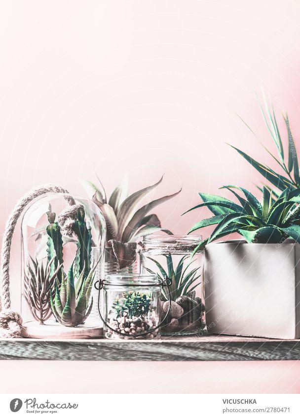 Zimmerpflanzen in Töpfen und im Glas Terrarium kaufen Design exotisch Freizeit & Hobby Häusliches Leben Wohnung Natur Pflanze Kaktus Topfpflanze Garten trendy