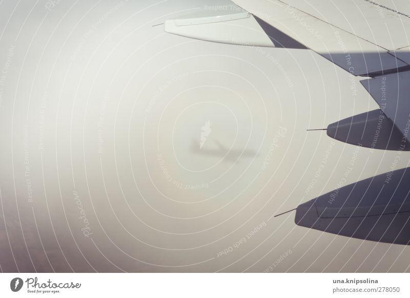 phantomflugzeug Wolken Sonnenlicht Luftverkehr Flugzeug Passagierflugzeug im Flugzeug Flugzeugausblick außergewöhnlich Farbfoto Gedeckte Farben Außenaufnahme