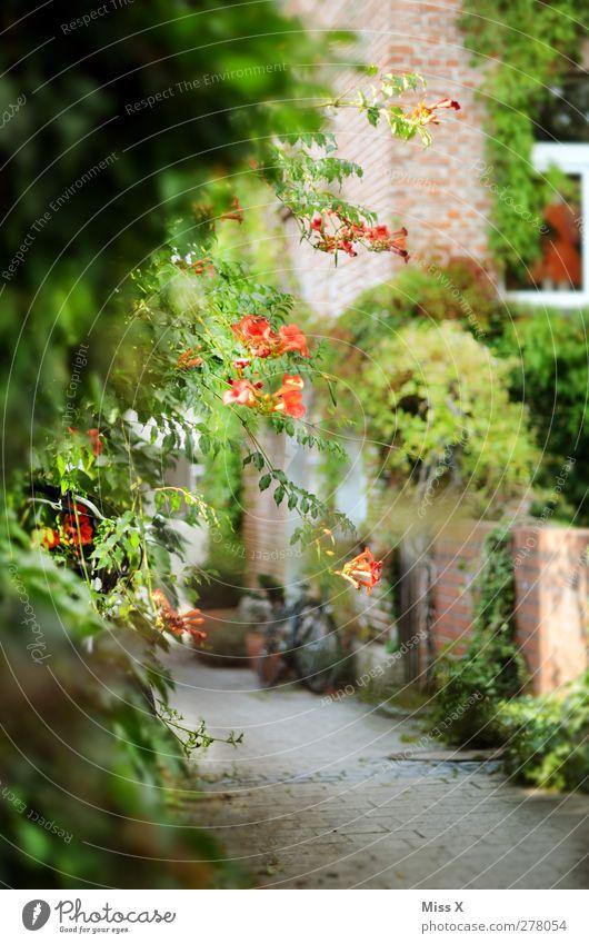 schönstes Plätzchen im Hood Sommer Pflanze ruhig Haus Wand Frühling Wege & Pfade Mauer Blüte Garten Idylle Wachstum Sträucher Blühend Gasse Altstadt