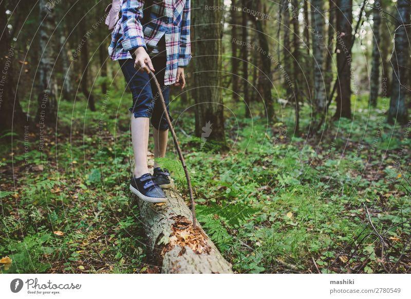 fröhliches Kind Mädchen erkundet den Sommerwald Lifestyle Glück Spielen Ferien & Urlaub & Reisen Abenteuer Freiheit Expedition wandern Kindheit Natur Pflanze