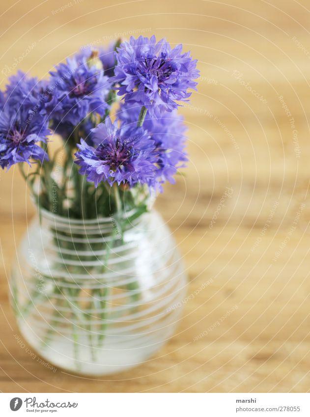 Kornblumen Pflanze Blume blau violett Vase schön Dekoration & Verzierung Unschärfe Blühend Sommer Blumenstrauß Farbfoto Innenaufnahme
