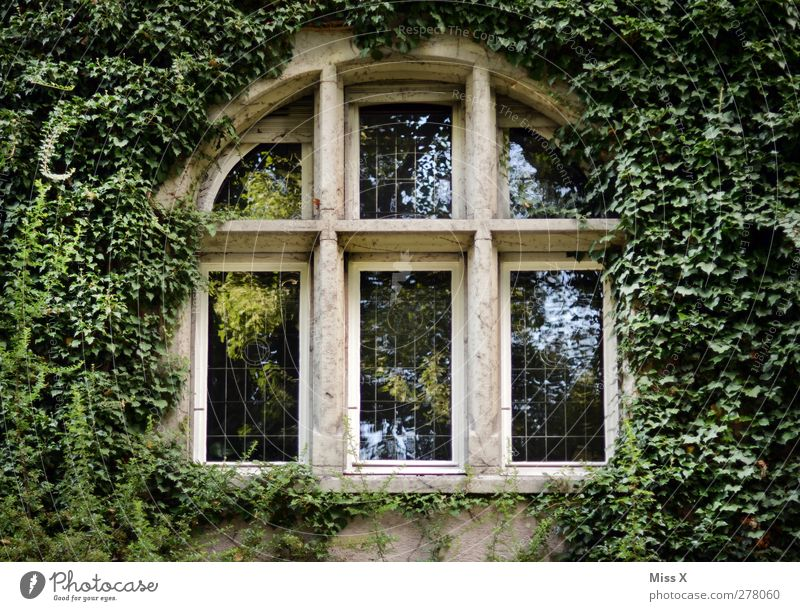 Dornröschen Pflanze Sträucher Blatt Haus Kirche Burg oder Schloss Fassade Fenster Wachstum alt grün Verfall Märchenschloss Efeu Ranke Farbfoto Außenaufnahme