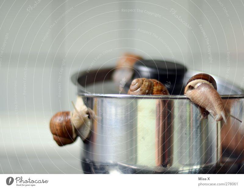 Escargot Lebensmittel Fleisch Ernährung Abendessen Festessen Topf Tier Schnecke Tiergruppe Ekel Weinbergschnecken krabbeln schleimig flüchten Farbfoto