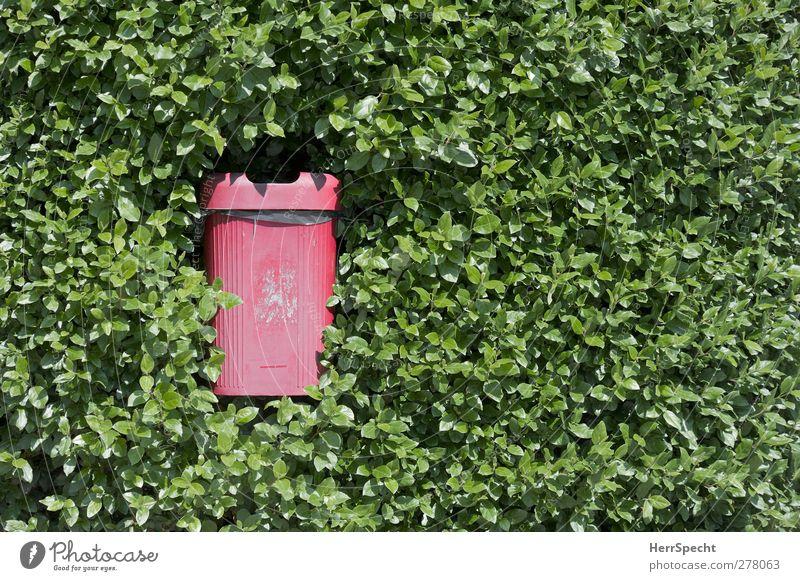 Müllschlucker Pflanze Sträucher Grünpflanze Kunststoff Wachstum bedrohlich grün rot Müllbehälter Müllentsorgung Hecke verschlucken zuwachsen verschlingen