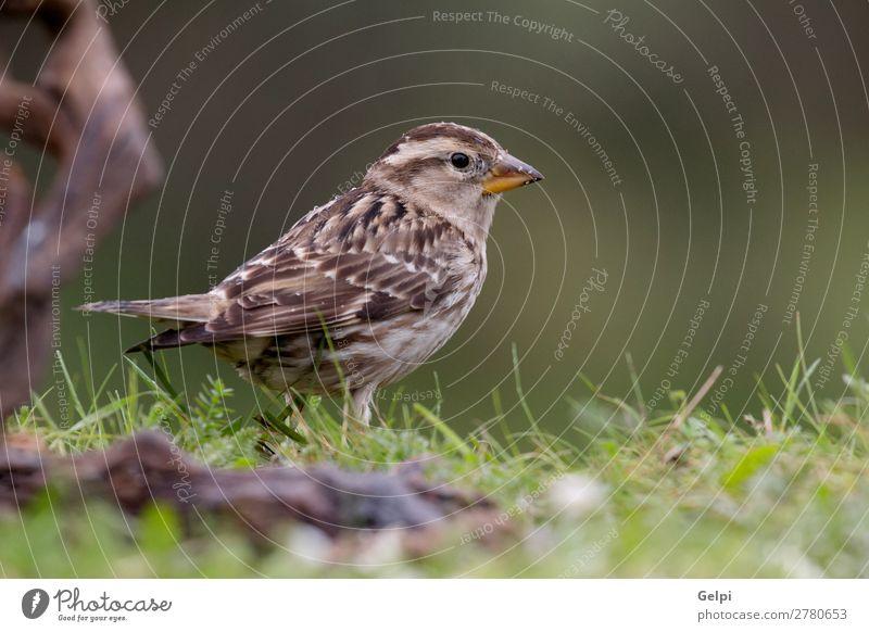 Frau Natur schön weiß rot Blume Tier Erwachsene Leben gelb Umwelt natürlich klein Vogel braun wild