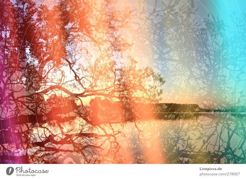 Farben der Müritz Kunst Maler Umwelt Natur Landschaft Wasser Himmel Wolkenloser Himmel Sonnenaufgang Sonnenuntergang Sonnenlicht Sommer Schönes Wetter Pflanze