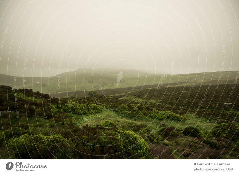 so ein M/mist Himmel Natur grün Sommer Pflanze Einsamkeit Wolken Landschaft Umwelt dunkel Gras Luft Wetter außergewöhnlich Klima Nebel