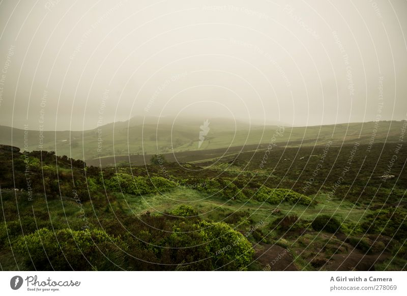 so ein M/mist Umwelt Natur Landschaft Pflanze Urelemente Luft Himmel Wolken Sommer Klima Klimawandel Wetter schlechtes Wetter Nebel Gras Moos Hügel authentisch