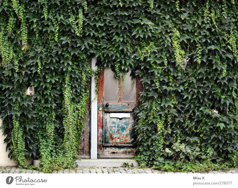 Wuchern Pflanze Sträucher Blatt Haus Mauer Wand Tür Namensschild Briefkasten Wachstum alt Verfall Holztür Wilder Wein Kletterpflanzen Ranke bewachsen