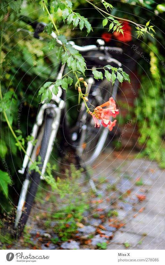 Verborgen Sommer Pflanze Sträucher Blatt Blüte Garten Park Verkehrsmittel Fahrrad Blühend Wachstum Abstellplatz parken bewachsen Farbfoto Außenaufnahme