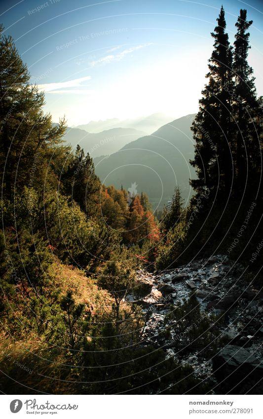 Autumn Forest Umwelt Natur Himmel Wolken Sonne Sonnenaufgang Sonnenuntergang Herbst Schönes Wetter Felsen Alpen Berge u. Gebirge Fröhlichkeit Zufriedenheit