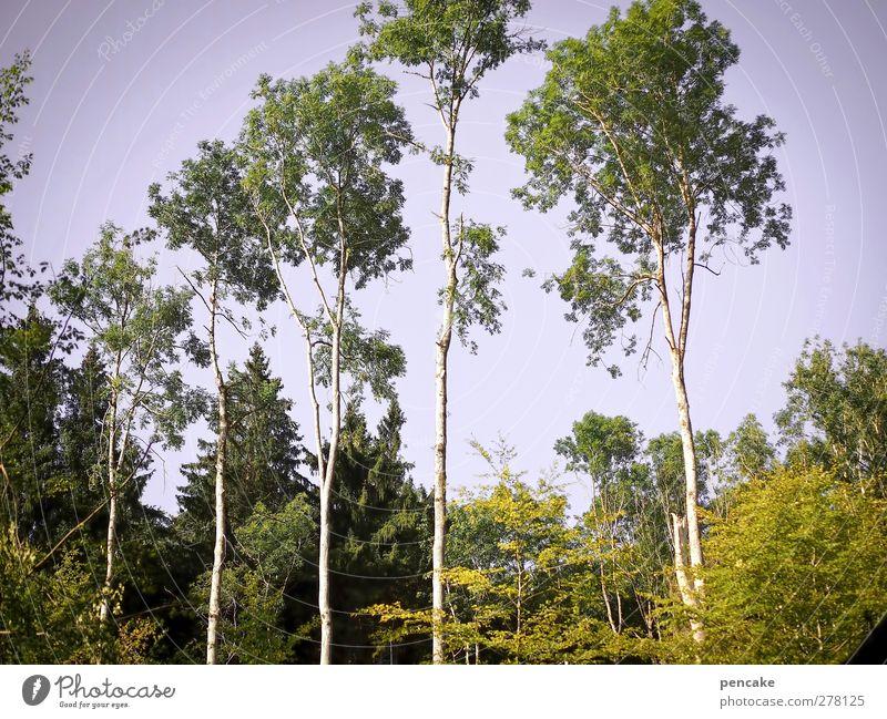im tal der königinnen Natur Sommer Baum ruhig Wald Landschaft Gefühle Fröhlichkeit Schönes Wetter violett Gelassenheit Wolkenloser Himmel Leichtigkeit Stolz