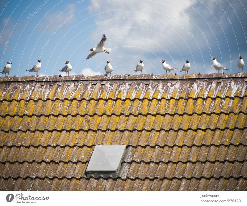 10-1 = 9 Wolken Sommer Schönes Wetter Dach Dachziegel Taube Schwarm fliegen warten oben Wärme blau braun Zusammensein Freiheit Idylle verwittert Abheben