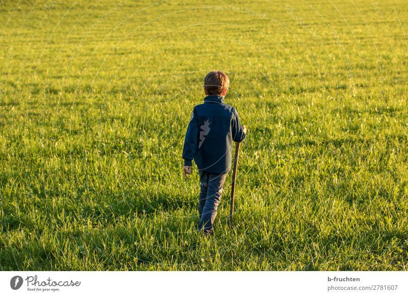 Kind auf einer Wiese, Herbst, Abendlicht Wohlgefühl Zufriedenheit Ferien & Urlaub & Reisen Sonne wandern Junge 1 Mensch 3-8 Jahre Kindheit Gras Feld Bewegung