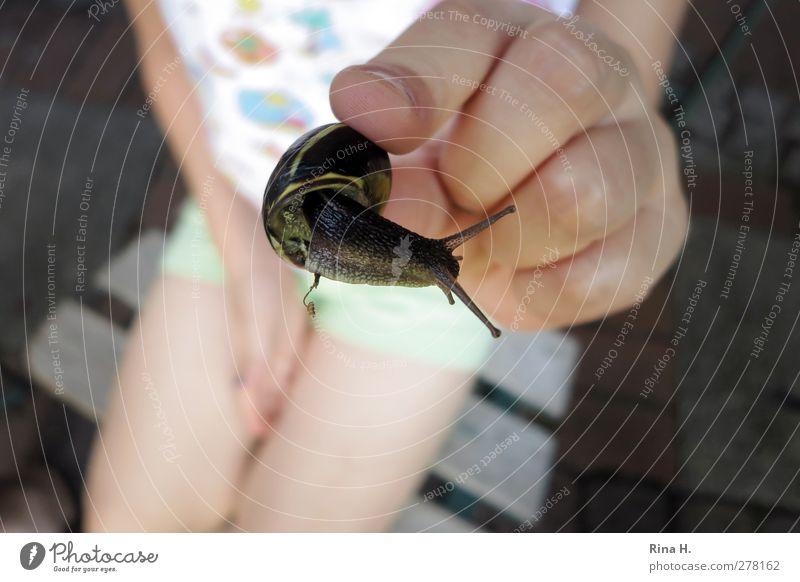 schau mal wie süß die ist ! Kind 1 Mensch 3-8 Jahre Kindheit Sommer Schnecke Tier festhalten Lebensfreude Hand Finger Schneckenhaus Vorsicht zeigen Fühler