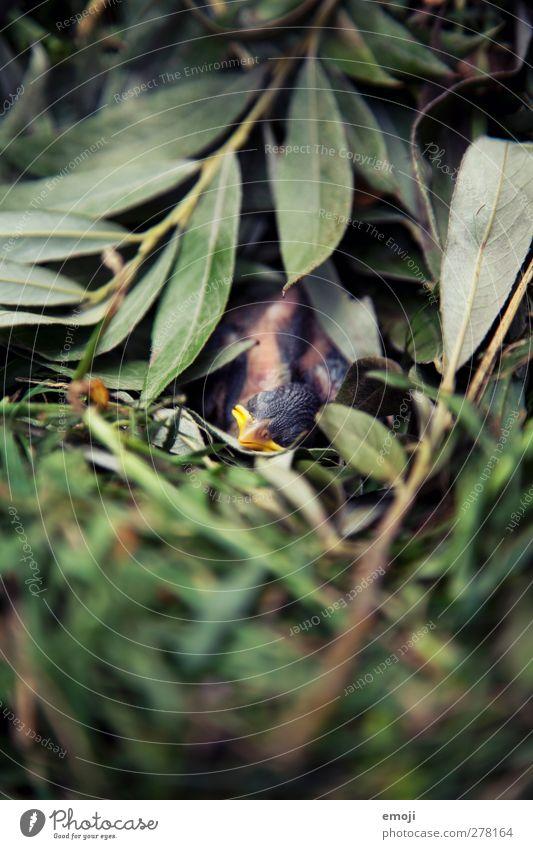 Vogelbaby Tier Blatt klein Tierjunges Wildtier niedlich Krankheit Nest Totes Tier Nestbau