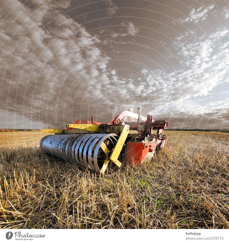 erntezeit Natur Sommer Pflanze Umwelt Horizont Arbeit & Erwerbstätigkeit Feld Kraft Erfolg Industrie Technik & Technologie Landwirtschaft Beruf Ernte Werkzeug