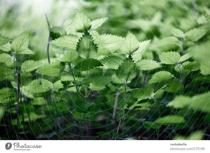 zeug. Natur grün Pflanze Blatt natürlich ästhetisch Grünpflanze Wildpflanze