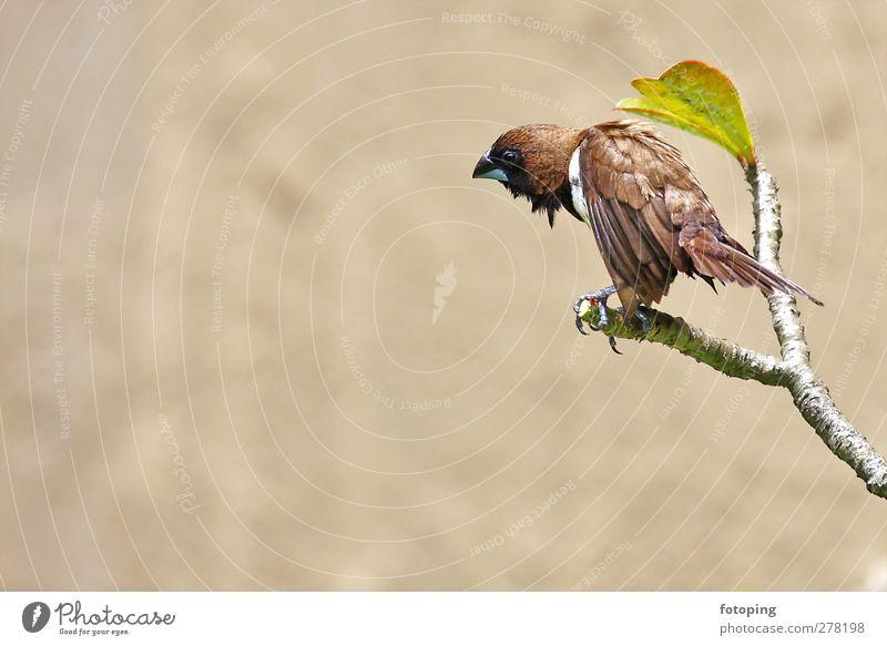 Vogel Tier Wildtier 1 sitzen Gefühle Traurigkeit Auge kaputt Schnabel Feder gefiedert Flügel grün braun Zweig Blatt Farbfoto Außenaufnahme Menschenleer
