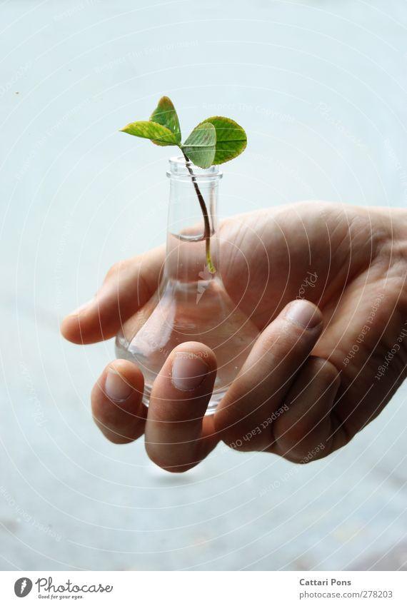 ich schenke dir GLÜCK. Maniküre Hand Natur Pflanze Blatt Grünpflanze Klee Kleeblatt vierblättrig Vase Glas festhalten authentisch einfach Freundlichkeit positiv