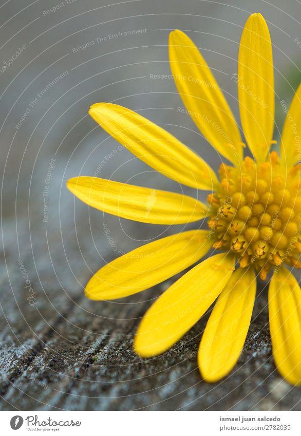 gelbe Blumenpflanze Blütenblätter Blütenblatt Pflanze Garten geblümt Natur Dekoration & Verzierung Romantik Beautyfotografie zerbrechlich Hintergrund Frühling