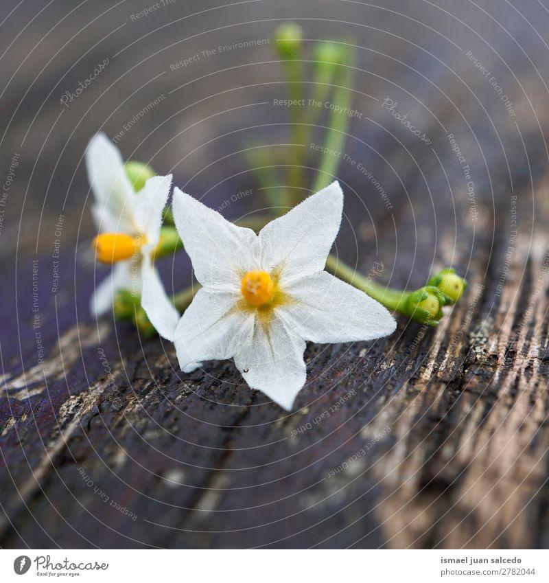 weiße Blütenpflanze Blume Blütenblatt Pflanze Garten geblümt Natur Dekoration & Verzierung Romantik Beautyfotografie zerbrechlich Hintergrund Frühling Sommer