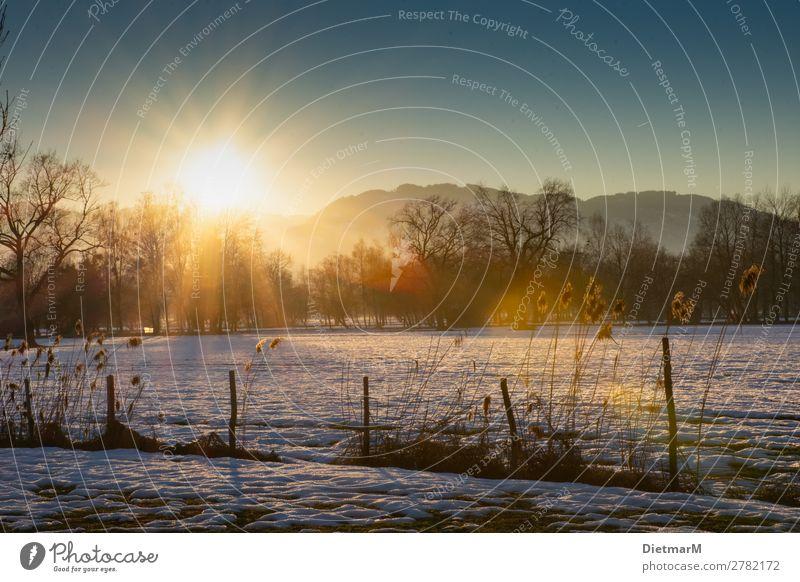 Sunset in the Lauteracher Ried Meditation Winter Natur Stimmung Landscape Hintergrundbild Swamp Snow Riedgras Österreich Bundesland Vorarlberg Rhine Valley